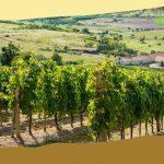 Borkóstoló: Erdőbénye finom borai (Veresvirág Panzió és környéke)