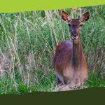 Előadássorozat: A gyergyói térség vadvilága és növényzete (Művelődési Ház)