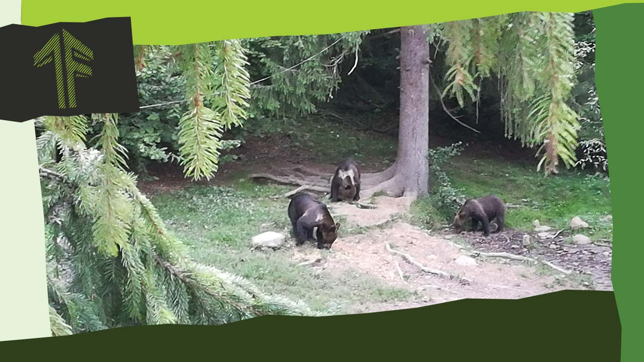 A medvék hétköznapjai (fizetős)