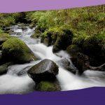 Képvetítés természeti látnivalóinkról (Veresvirág Panzió és környéke)